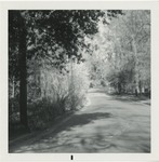 Saw Dust Rd. in Conway, S.C. by Horry County Historical Society