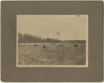 Field with piles of wheat (1919) by Horry County Historical Society