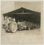 Loading trailer with tobacco on 7/3/1974 by Horry County Historical Society