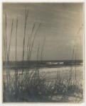 Ocean view through sea oats from sand dunes. by Horry County Historical Society