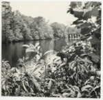 View of the Waccamaw River by Horry County Historical Society