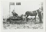 Mr. Joe Allsbrook (standing) with his horse and buggy by Horry County Historical Society