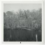 An overturned boat in Conway on the Waccamaw River. by Horry County Historical Society