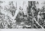 """View along the trail on Kingston Lake, """"Mayo Place"""" by Horry County Historical Society"""