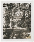 Lakeside Drive toward Lakeside Cemetery by Horry County Historical Society
